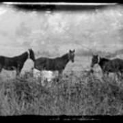 Horse Trio In Morning Fog Poster