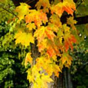 Foliage Fall Poster