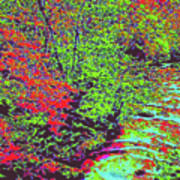 Foliage Stream D4 Poster