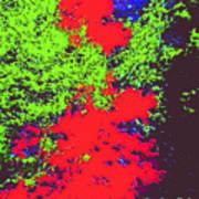 Foliage Trees Dd4 Poster
