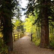 Footbridge In Aspen Colorado Poster