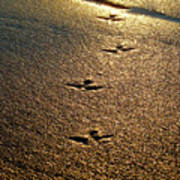 Footprints - Bird Poster