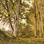 Forest At Fontainebleau Poster