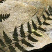 Forest Fern Shadows Poster