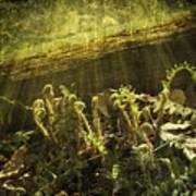 Forest Ferns Unfurling Poster