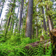 Forest Floor Of Hoh Rain Forest Poster