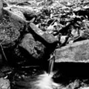 Forest Stream In Black And White Poster