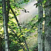 Forest Sunbeam Poster