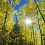Forest Sunshine Poster