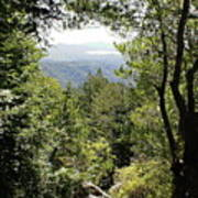 Forest View From Mt Tamalpais Poster