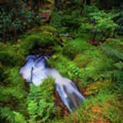 Forest  Water Stream. Benmore Botanic Garden Poster