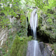 Forest With Waterfall Poster