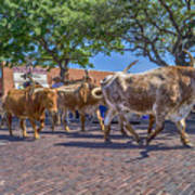 Fort Worth Stockyards Longhorn Drive Poster