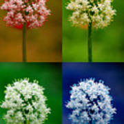 Four Colorful Onion Flower Power Poster