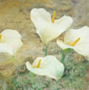 Four Lilies Poster