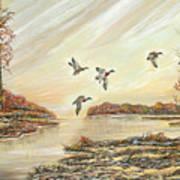 Four Mallards Over Autumn Lake Poster
