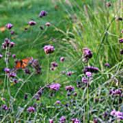 Four Monarch Butterflies Poster