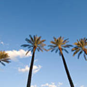 Four Palm Trees Poster