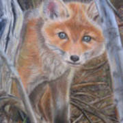 Fox Cub Poster