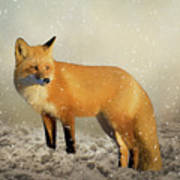 Fox In The Snowstorm - Painting Poster