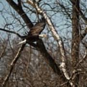 Fox River Eagles - 20 Poster