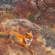 Fox With Hounds Poster