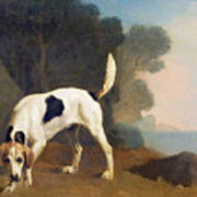 Foxhound On The Scent Poster by George Stubbs