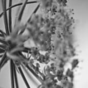 Fractal Flower Photoset 03 Poster