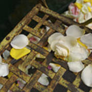 France Flower Petals, Rose, Still-life Poster