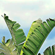 Frayed Palm Fronds Against Blue Sky Poster