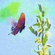Free To Fly - Butterfly In Flight Poster
