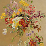 Freesias And Primroses Poster