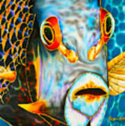 French Angelfish Face Poster