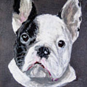 French Bulldog Close Up Poster