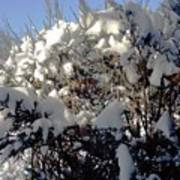 Fresc Snow Poster