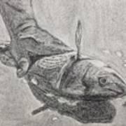 Fresh Catch Poster