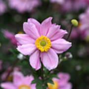 Fresh Field Flowers Poster