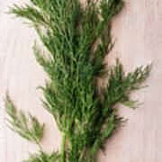 Fresh Green Dill On Wooden Plank Poster
