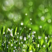 Fresh Spring Morning Dew Poster