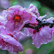 Fresh Spring Rain Poster