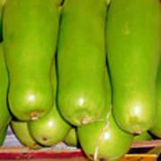 Fresh Vegetable Gourd Poster
