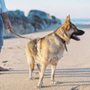 German Shepherd With Man On The Beach Poster
