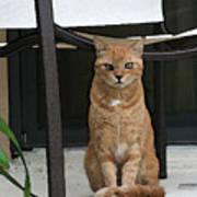 Friendly Cat In Key Largo Poster