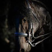 Friesian Horse Portrait Dark Poster