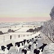 Friesians In Winter Poster