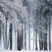 Frigid Forest Poster