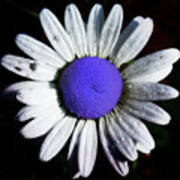 Fringe - Blue Flower Poster