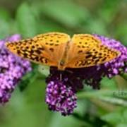 Fritillary One Poster
