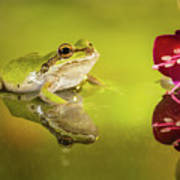 Frog And Fuchsia With Reflections Poster