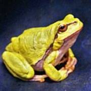 Frog - Id 16236-105000-7516 Poster